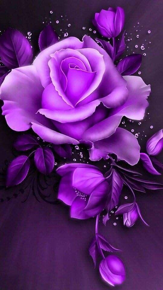 Pin By Yasar Tataroglu On Roses Purple Flowers Wallpaper Purple Roses Flower Wallpaper