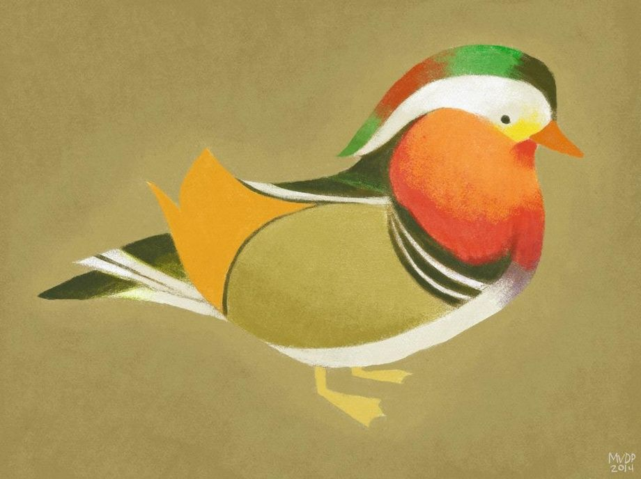 Mandarin Duck by Melissa  van der Paardt