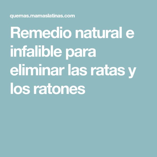 Como Acabar Con Las Ratas En El Campo Remedio Natural E Infalible Para Eliminar Las Ratas Y Los Ratones