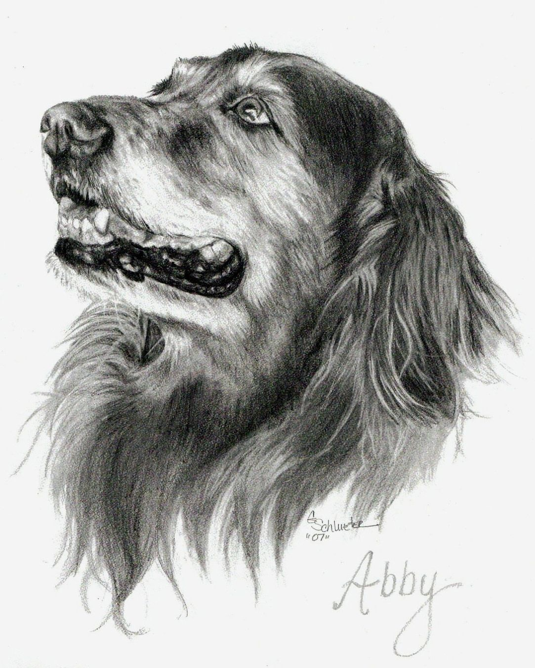 Dog Art, Pet Art, Pet Portraits, Dog Portraits Abby the Golden Retriever Sketch. #Pet Portraits by artist Genevieve Schlueter. Have a custom piece of your dog. Visit http://www.gensart.net to learn how. Great gift idea for a birthday, Xmas or special occasion.