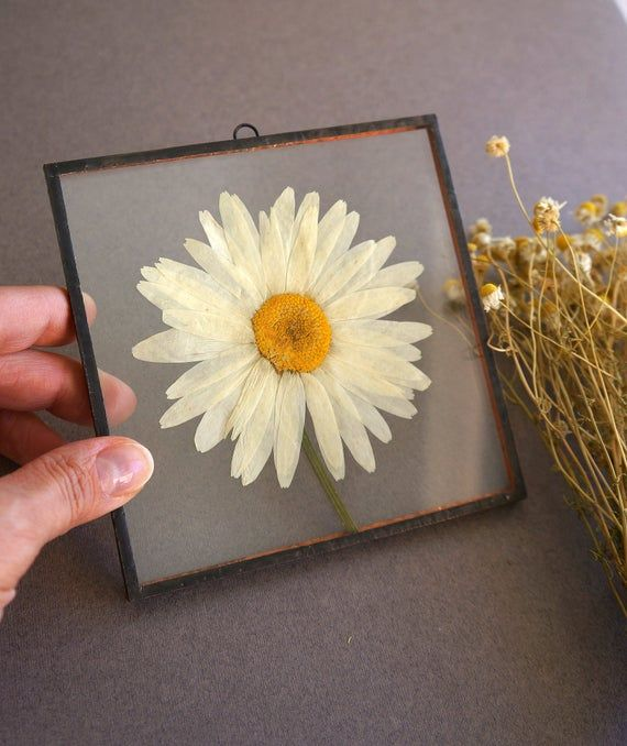 Photo of Real pressed white daisy flower Stained-glass decor Daisy wall decor Square glass frame Flower lover gift Floral room decor Summer time gift