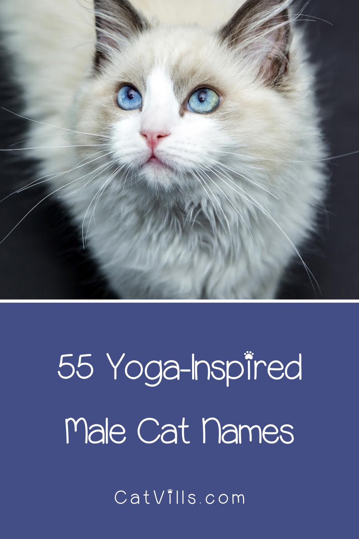 110 Serene Yoga Cat Names for Your Zen Kitty Cat names