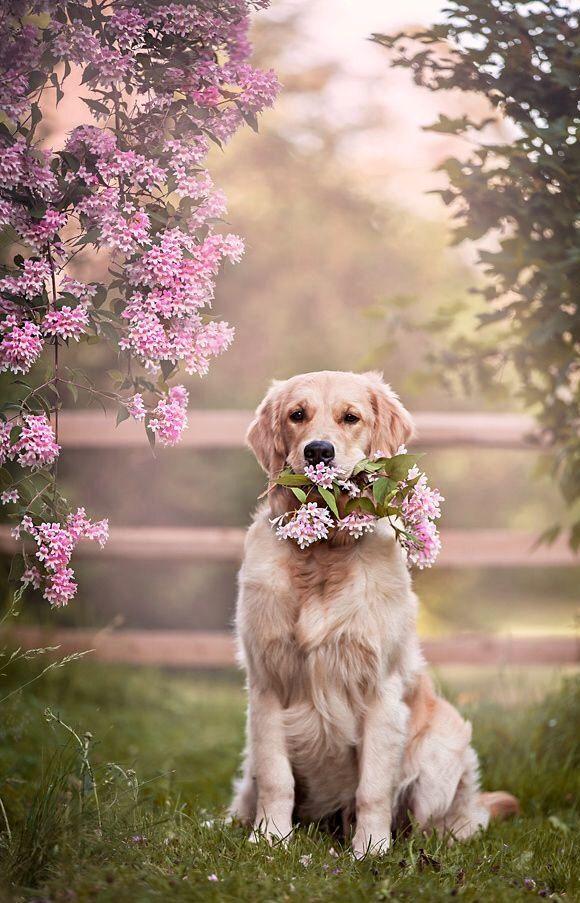 Pin Von Lida G Auf Spring Pinks Hunde Hund Tumblr