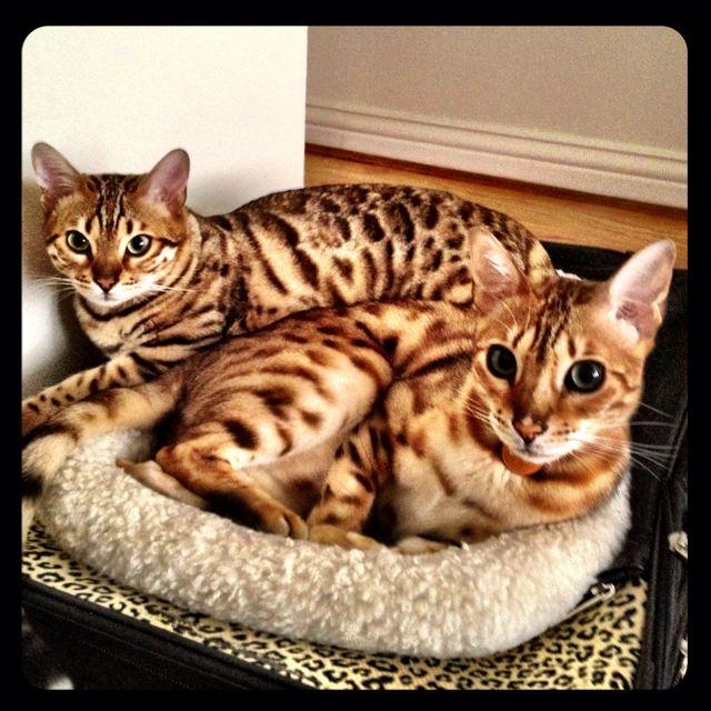 Beautiful cats!