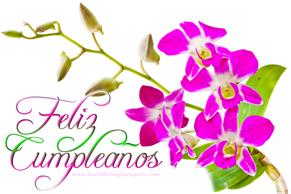 Imagenes De Cumpleaños De Flores En Hd Gratis Para Whatsapp 9 para WhatsApp en HD Proyectos