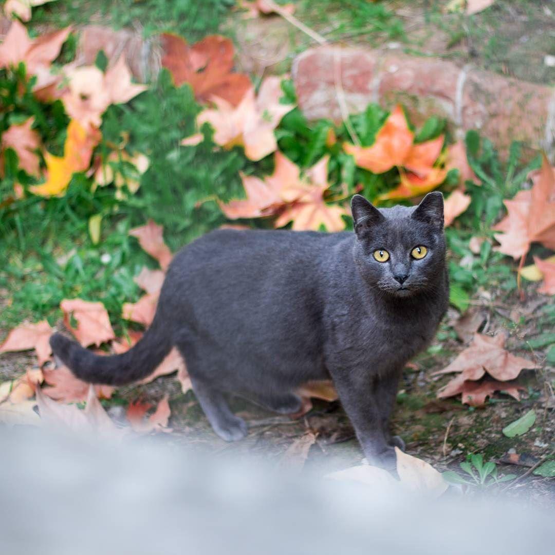 Meow? Esta gatita posó para mí el otro día y como aún no tengo listas las fotos del #InstaShootMadrid os dice hola.