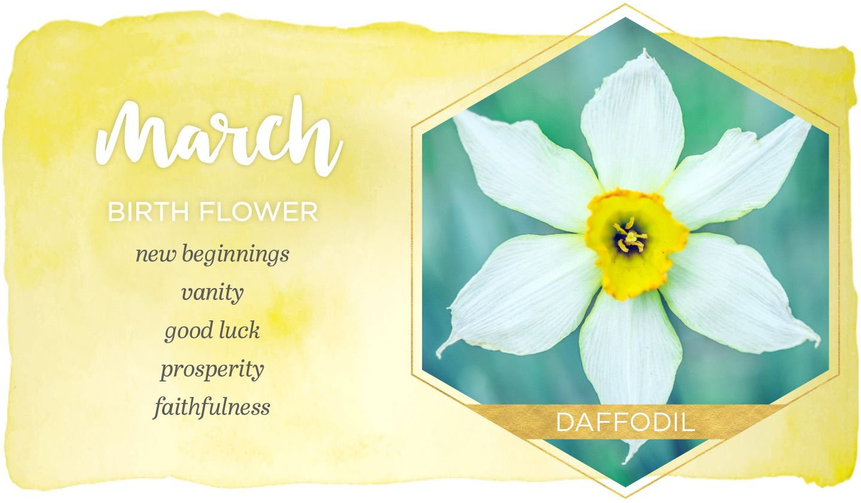 March Birth Flower Daffodil Ftd Com In 2020 March Birth Flowers Birth Month Flowers Birth Flowers