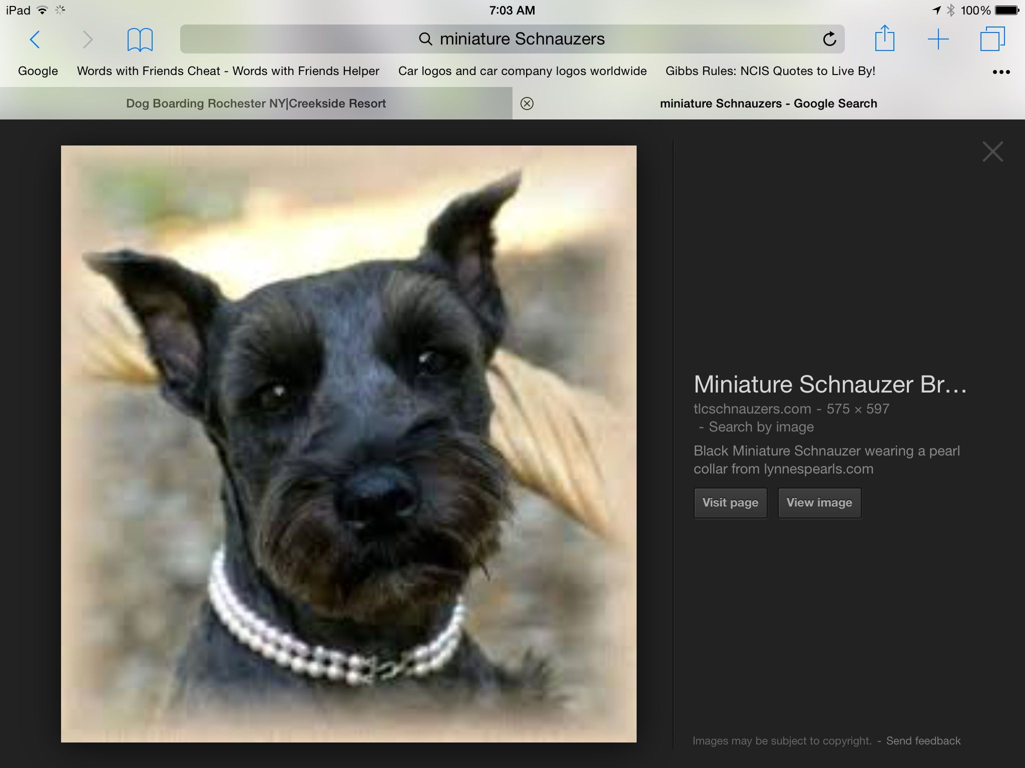 Pin By Linda Valentine On Miniature Schnauzer Dog Boarding Words With Friends Miniature Schnauzer