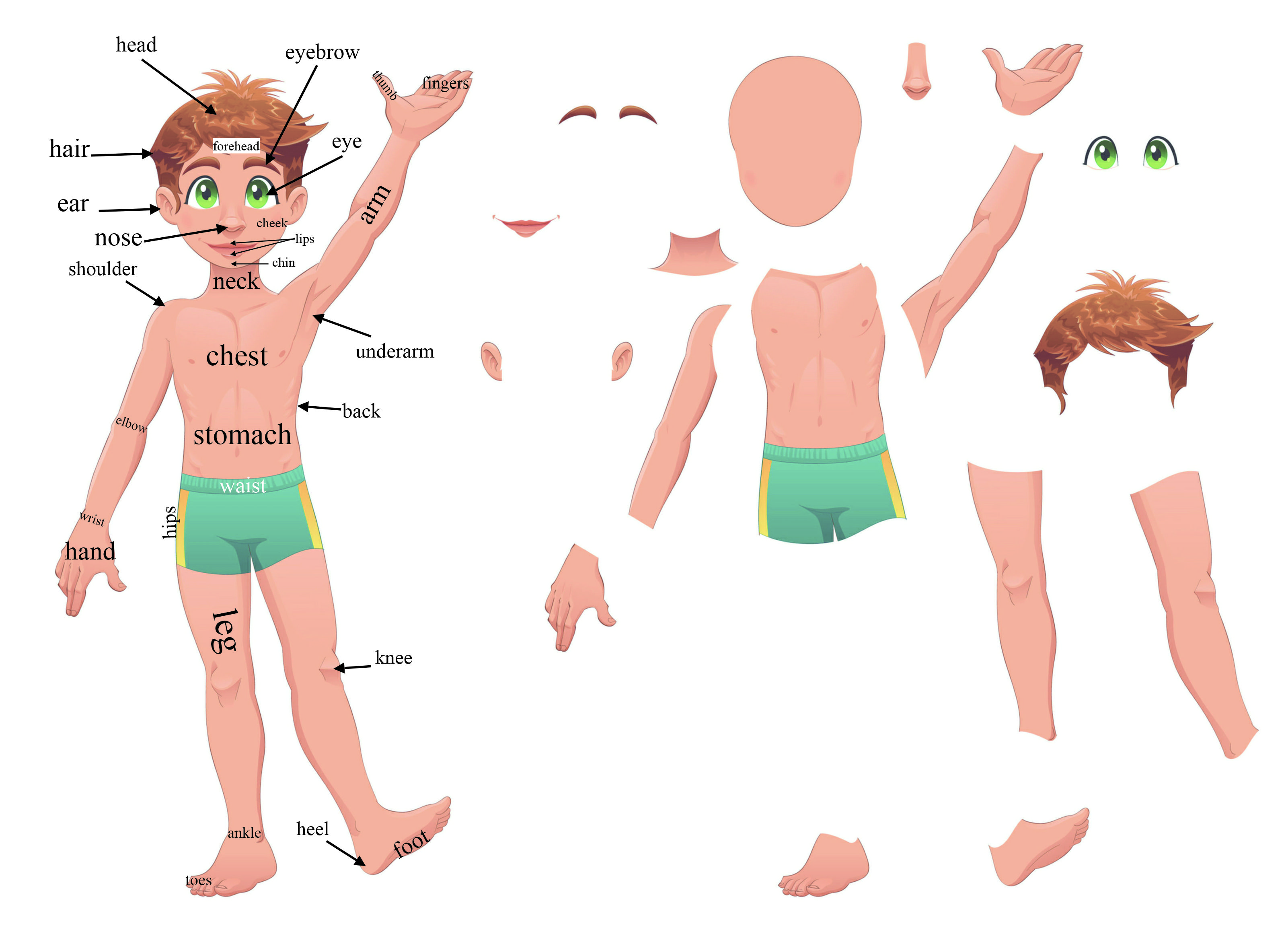 body parts - lessons - tes teach, Human Body