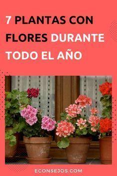 Plantas con flores durante todo el año