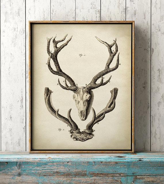 Deer Antlers print, Deer Antlers poster, animal anatomy