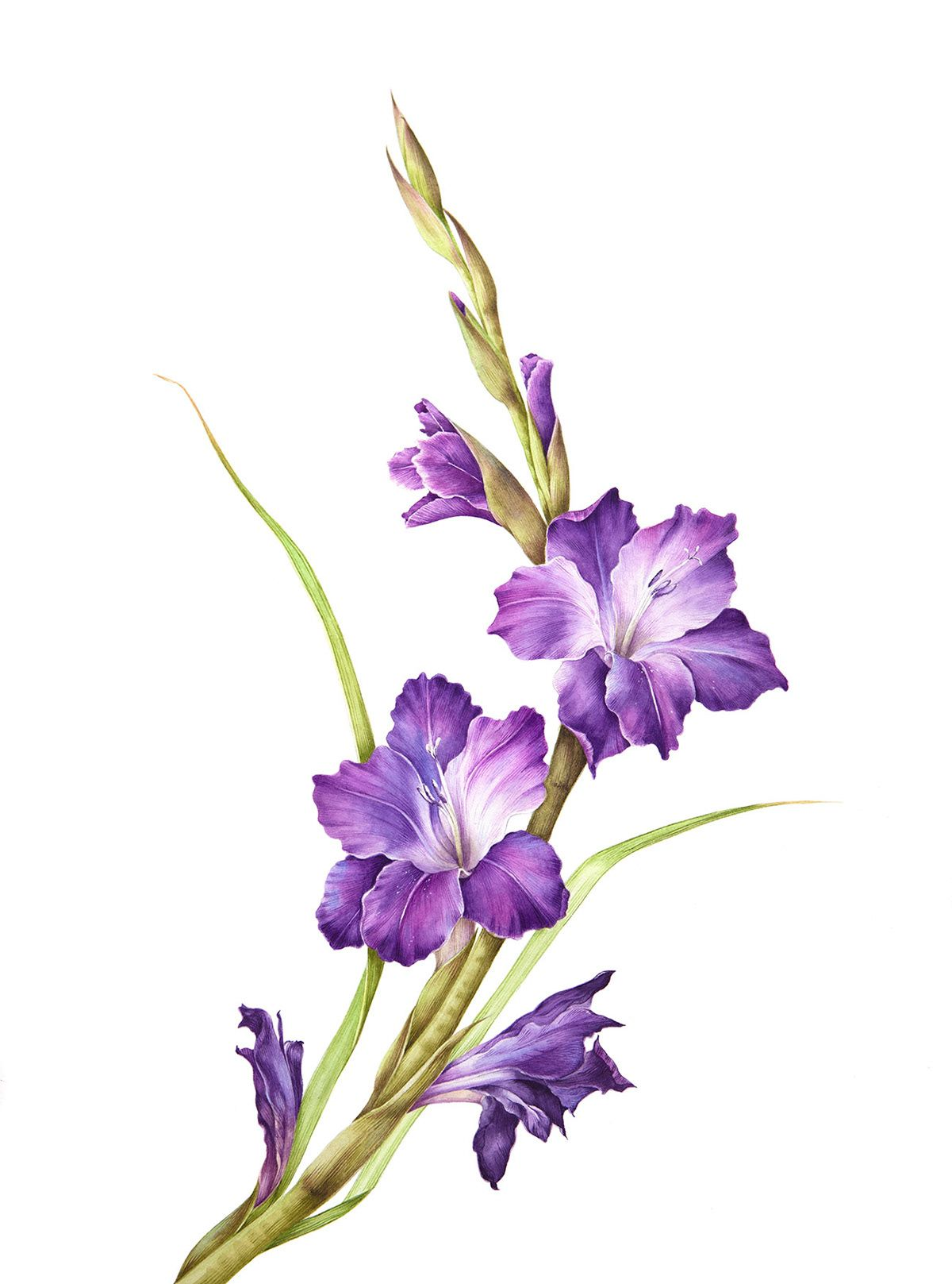 Gladiolus Represent Strength Honor And Conviction In 2020 Birth Flower Tattoos Gladiolus Flower Tattoos Gladiolus Flower