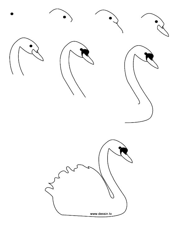 Schwan zeichnen lernen in acht Schritten, Anleitungen für ...