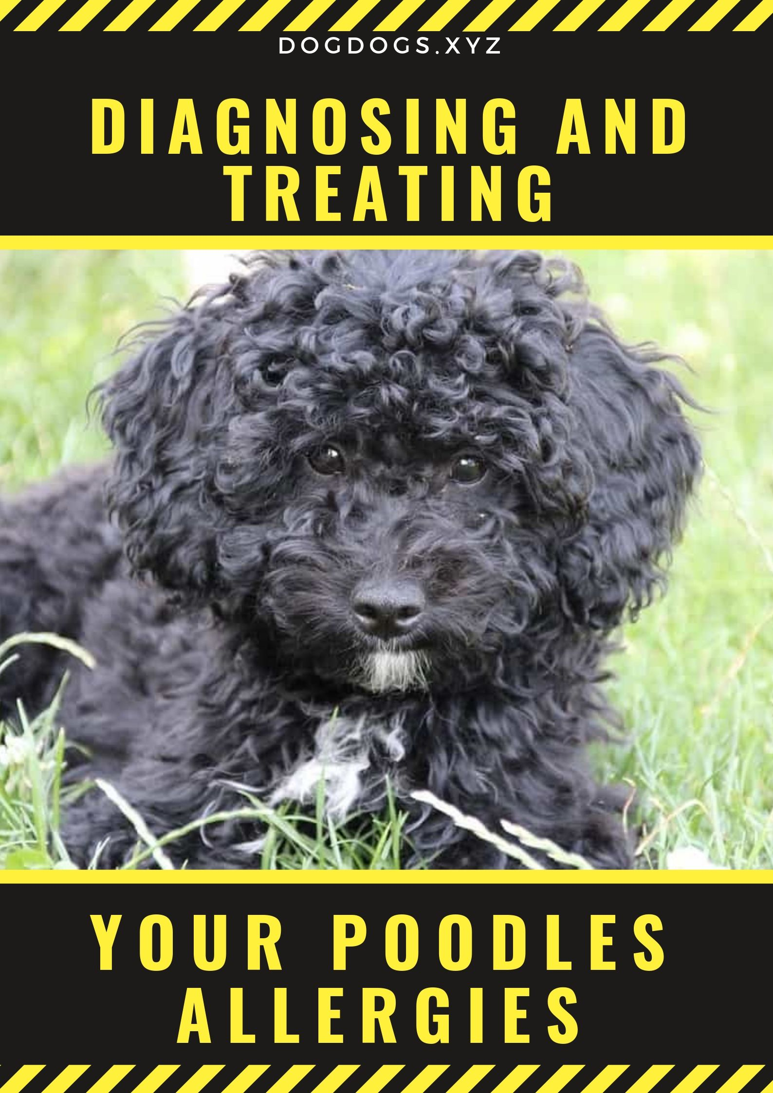Diagnosing Treating Your Poodles Allergies Food And Drink
