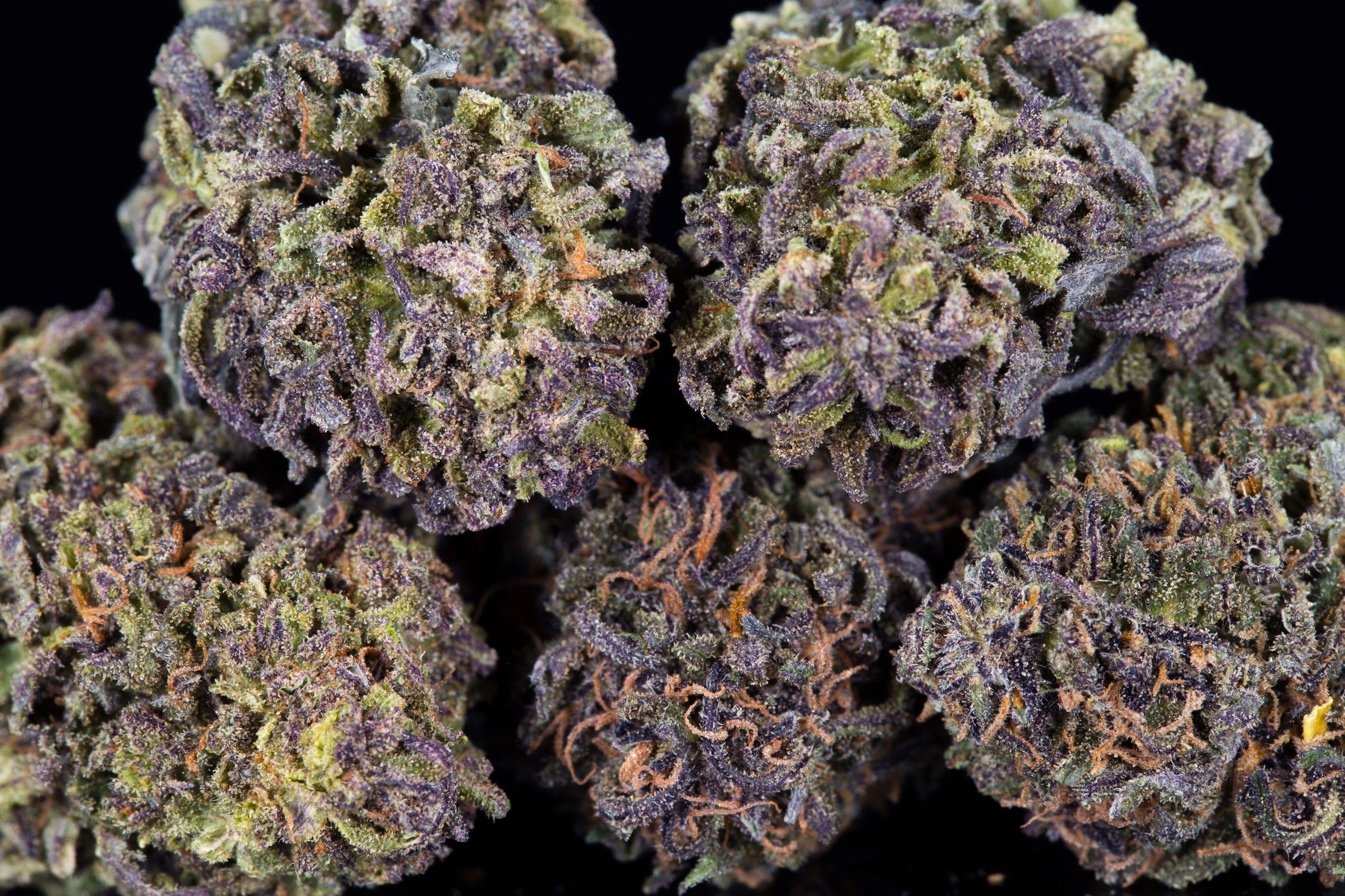 Cbg Hemp Seeds For Sale
