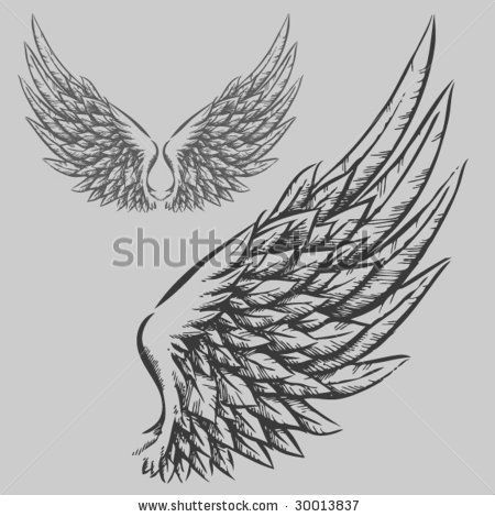 Wings Hand Drawn Vector Illustration 30013837 Shutterstock Eagle Wing Tattoos How To Draw Hands Hand Drawn Vector Illustrations