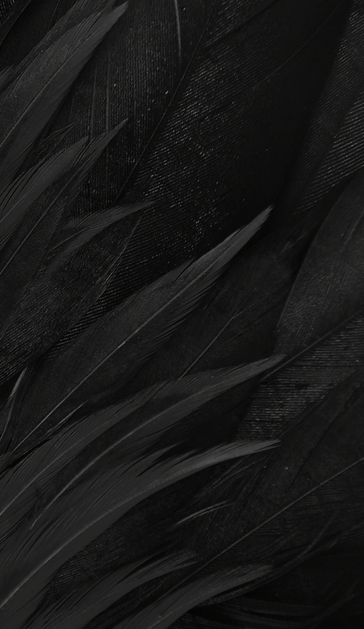 black feathers blackfeathers in 2019 black feathers