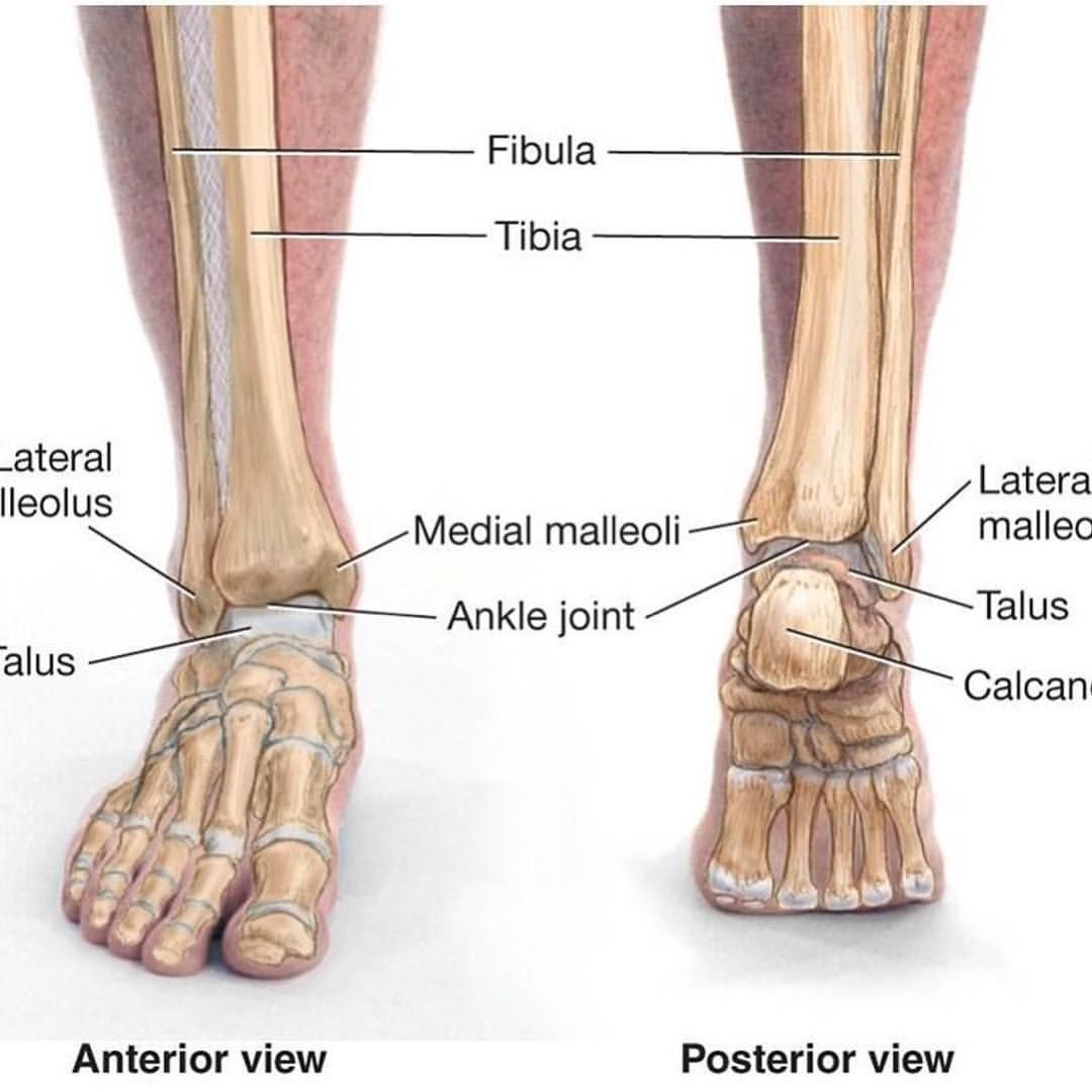 Do tight shoes   create poor mobility in the foot foot and