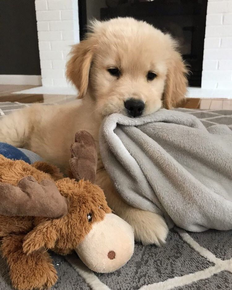 Dogs Love Aesthetic Puppy Happy Animal Sweet Cute Dog