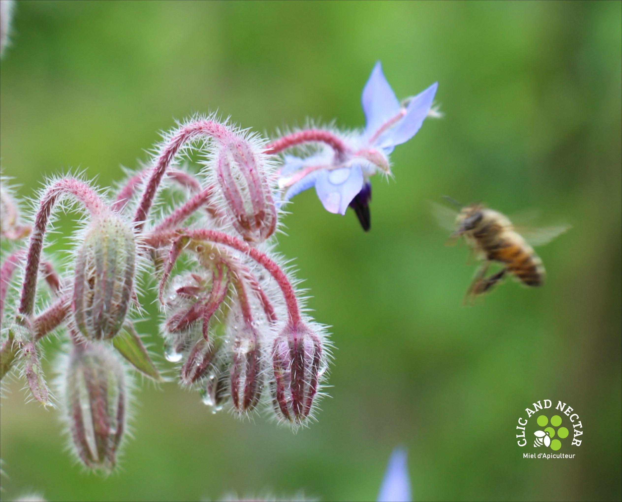 12+ Faire venir les abeilles dans son jardin trends