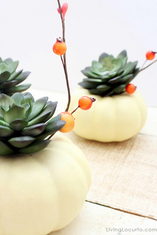 Simple Succulents