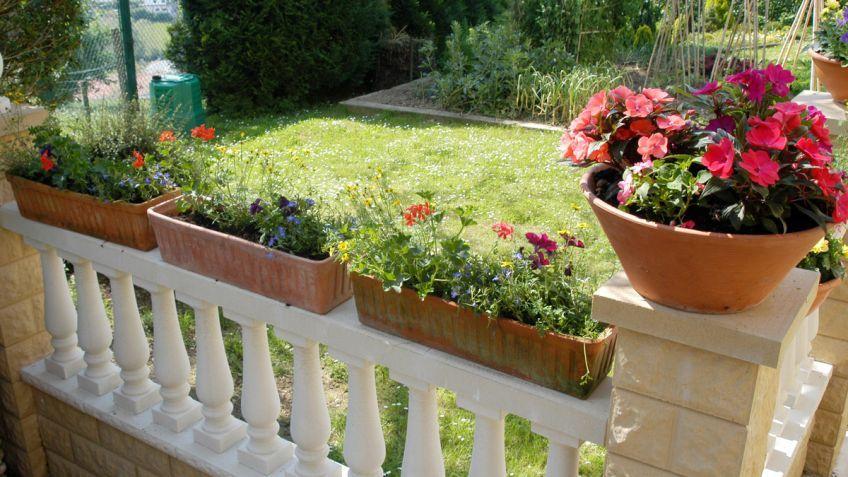 Plantas Para Terrazas Con Mucho Sol. Interesting Amazing Simple ...