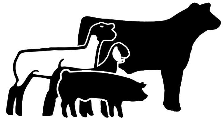 Animl Clipart Livestock Show 7 Showing Livestock Show Cattle Livestock Judging