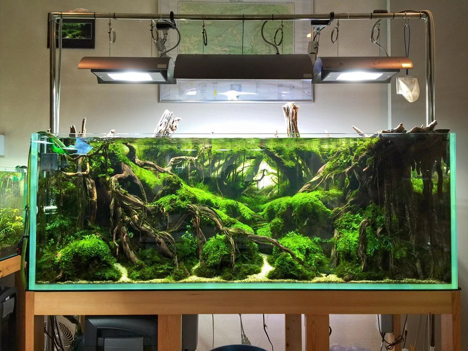 50 Aquascape Aquarium Design Ideas | Aquariums, Tropical fish and ...