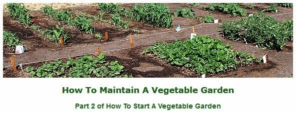 Your First Vegetable Garden: Step-by-Step. Have you been dreaming about starting a vegetable garden but keep putting it off because you have no idea how to even begin the process? Now you can plant the garden you have been longing for with the help of this wonderful step-by-step tutorial that will take you through the process from start to finish, including photos of how it's done. #gardening
