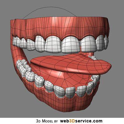 Google Image Result for http://www.web3dservice.com/3d_models/images/mouth_interior_3d_model_01.jpg