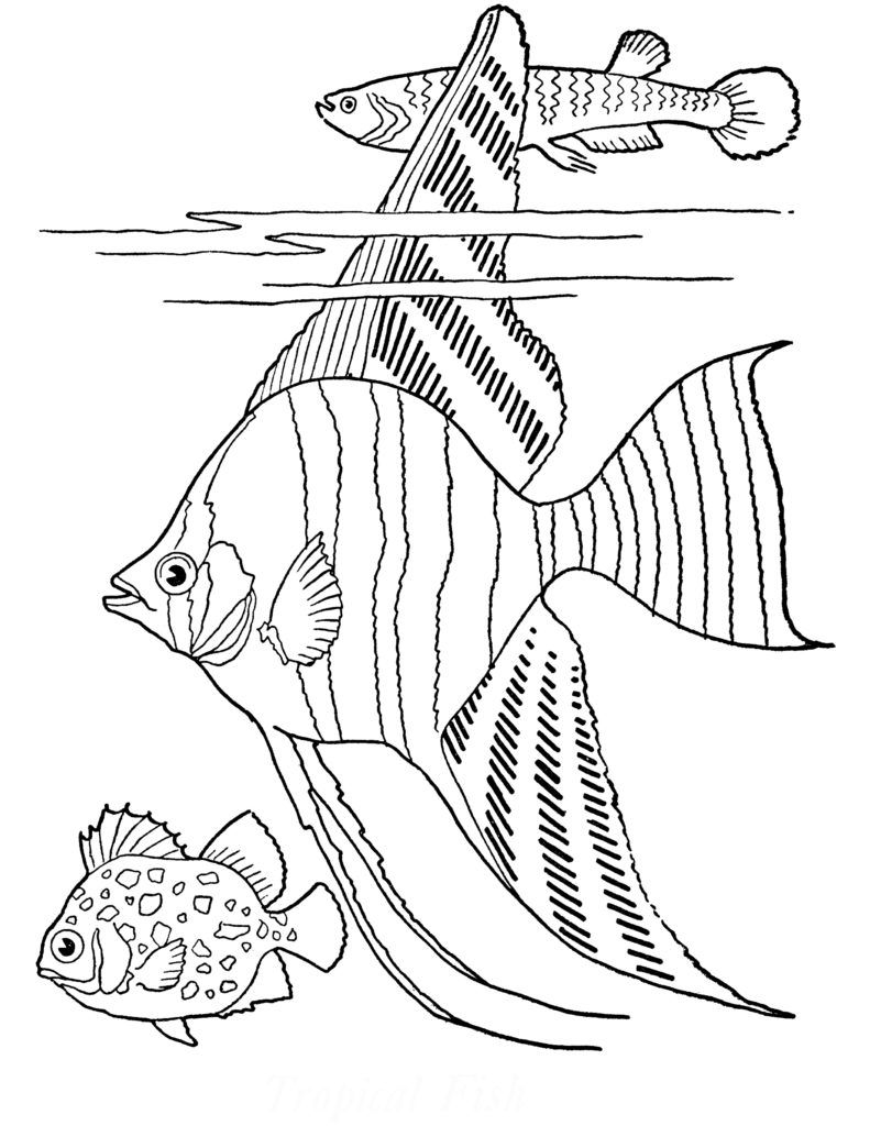 Free Printable Adult Coloring Page - Tropical Fish! | Fish ...