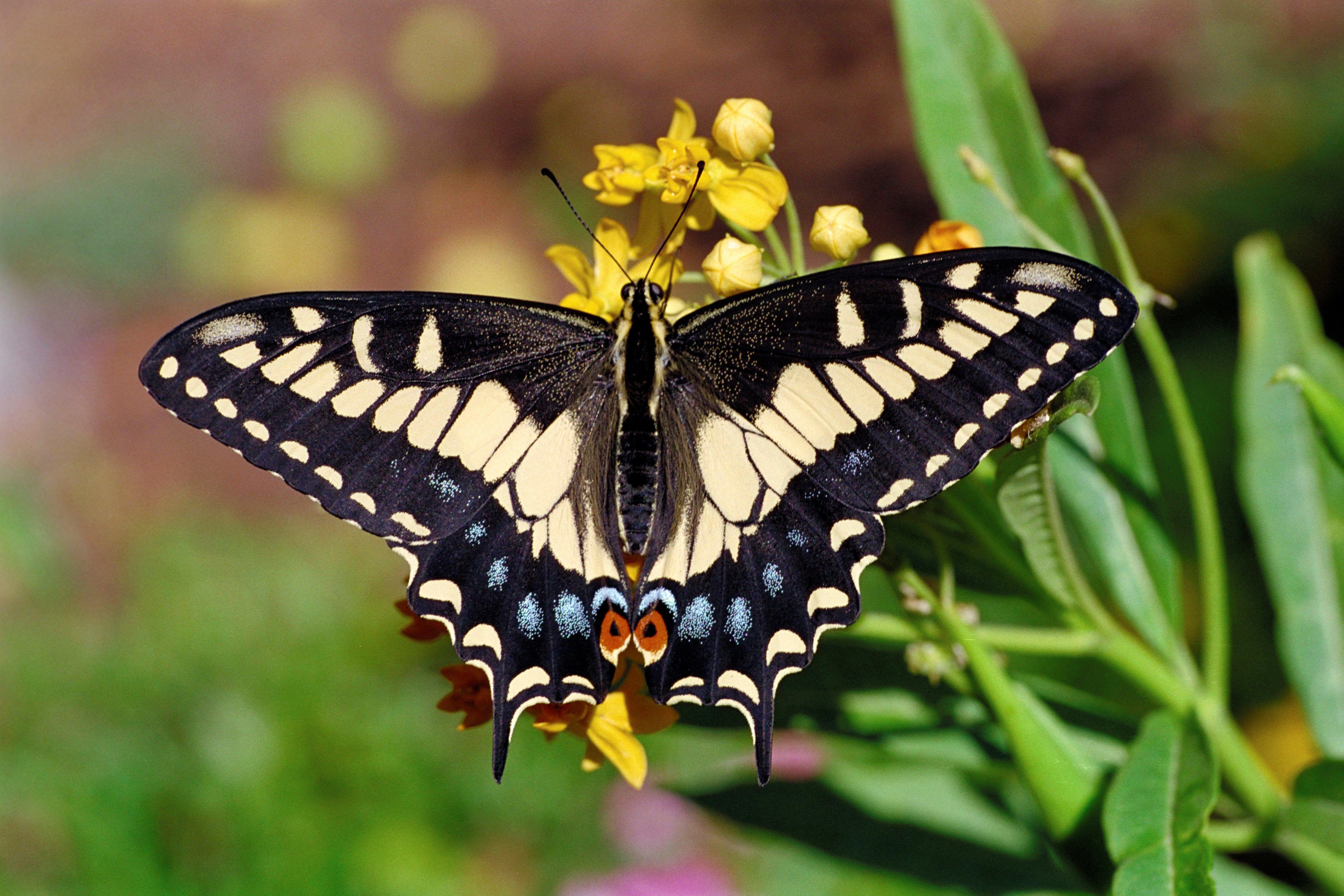 download butterfly wallpaper ololoshenka pinterest butterfly