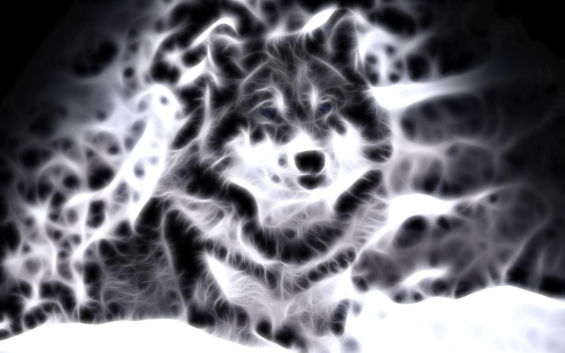 Lightanimals Cool Animal Wallpaper Light Wolf Wallpapers For Gt
