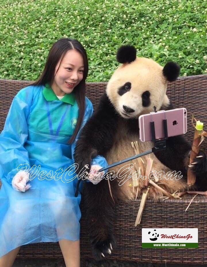 Dujiangyan Panda holding