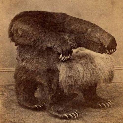 """A fabulously creepy vintage taxidermy """"bear"""" armchair."""