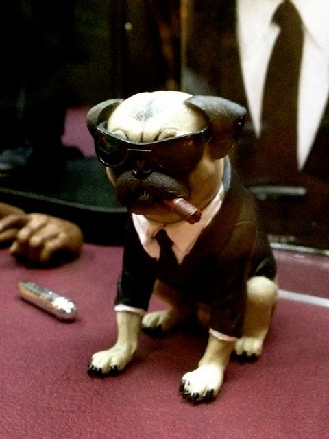 The Coolest Frank The Pug Men In Black Iii Frank The Pug Pug