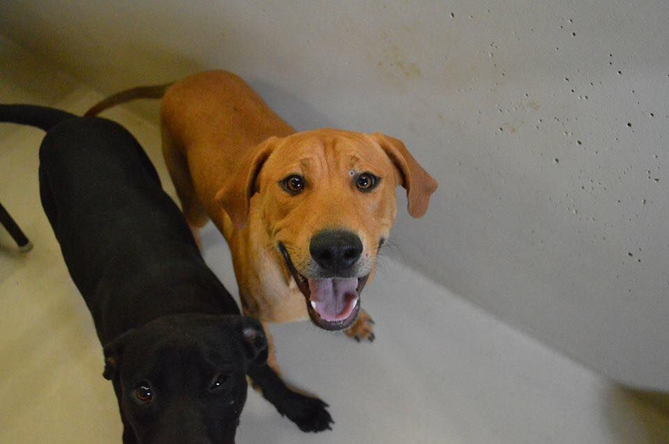 Safe 12 03 15 Odessa Tx Urgent Speaking Up For Those Who