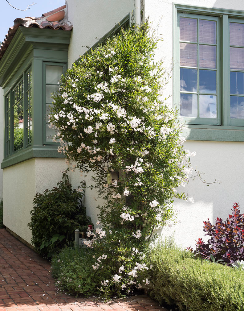 9 Ways to Create Curb Appeal with Flowering Vines and Climbers - Gardenista