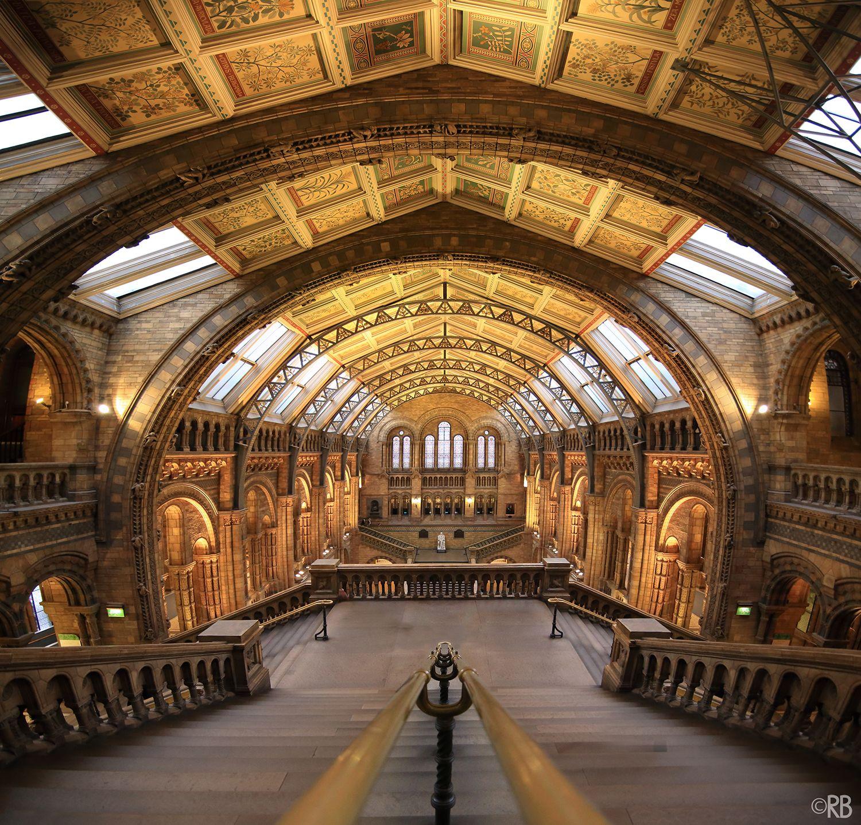 Musée d'histoire naturelle - Natural History Museum - Londres