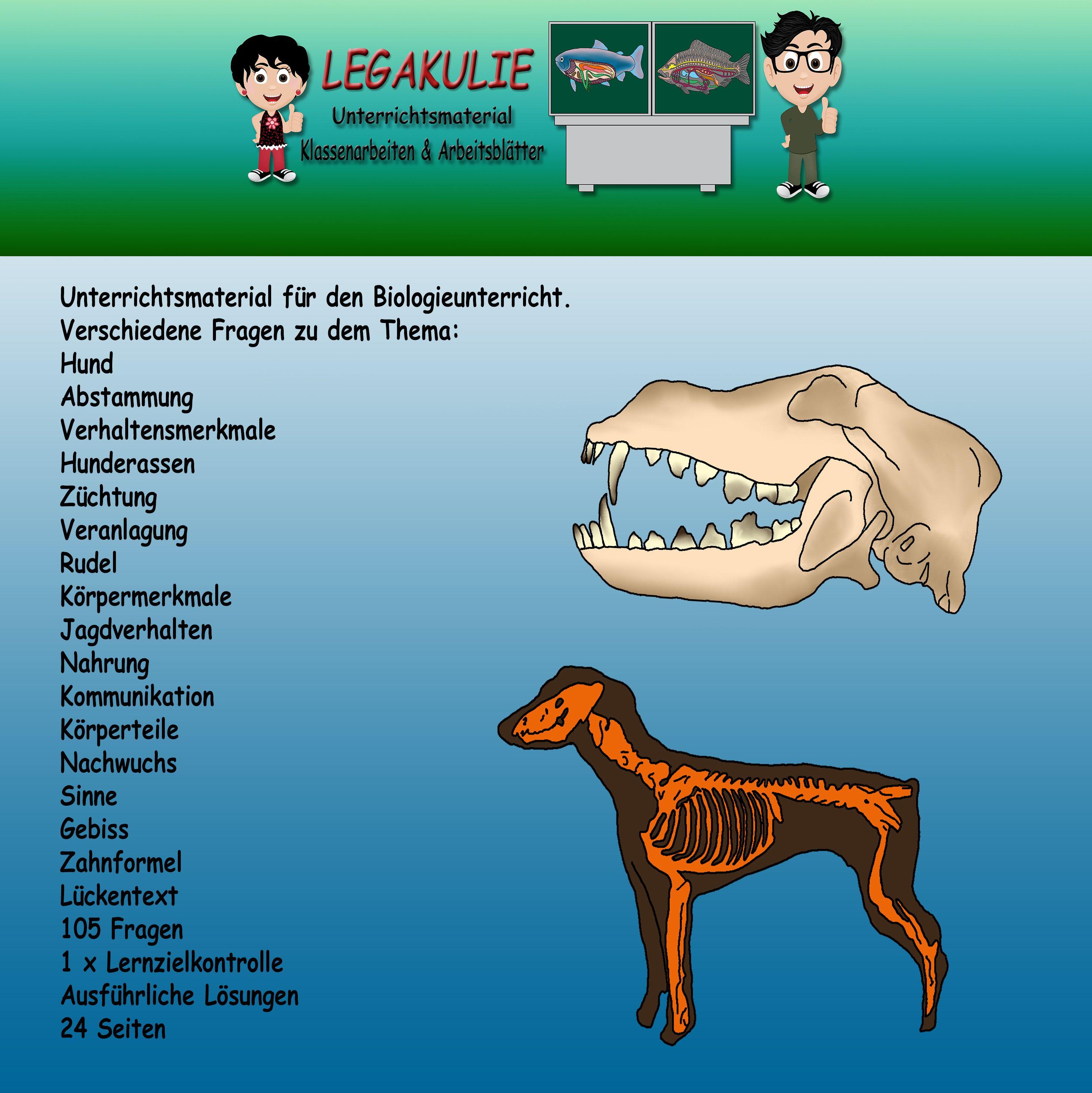 Hund | Pinterest | Klassenarbeiten, Abstammung und Gebiss