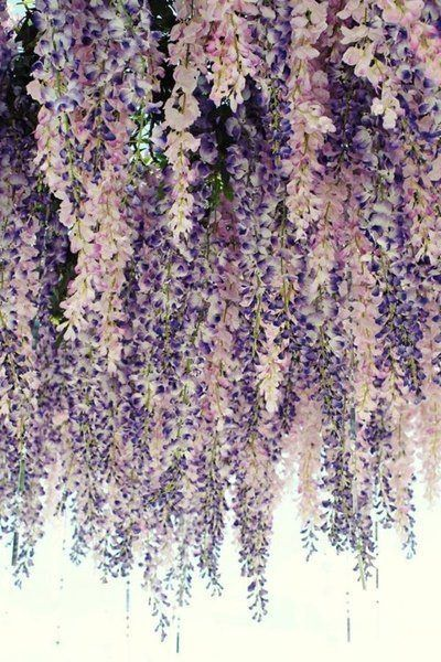 Hanging Flowers Wisteria Flowers Or Fiji In Japanese Great For The Arch Tunnels In Salvation Garden Bloemplanten Tuinplanten Tuinbloemen