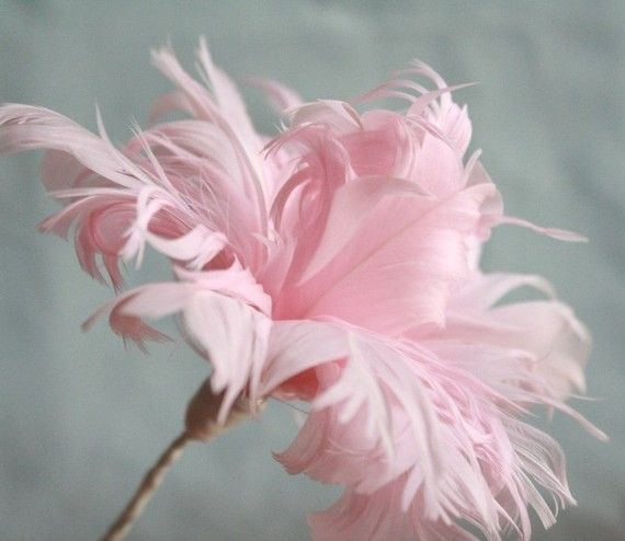 pretty pink feather flowers...