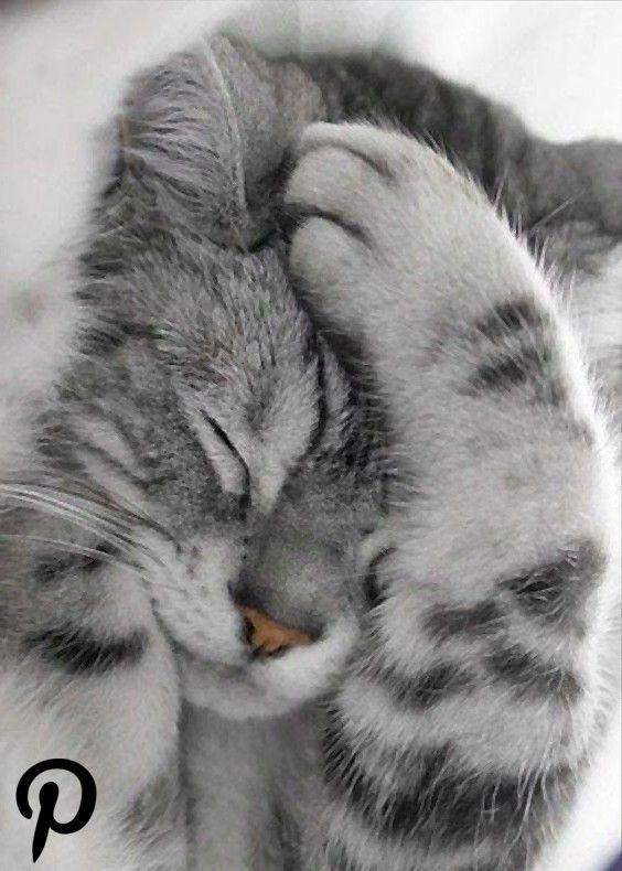 31 Cute Cat Pictures  Adorable Kitten 31 Cute Cat Pictures  Adorable Kitten