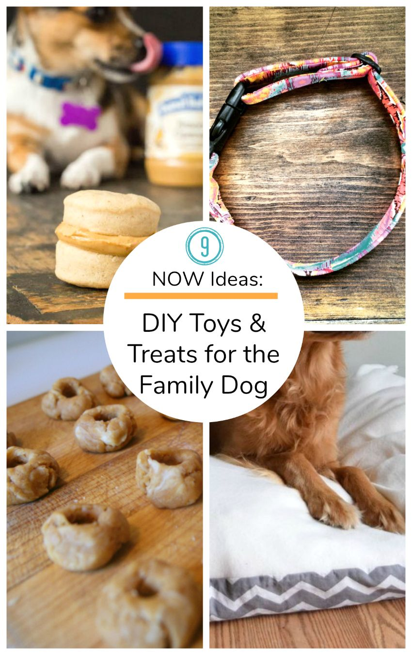 9 Now Ideas Treats Toys To Make For The Family Dog Mason Jar