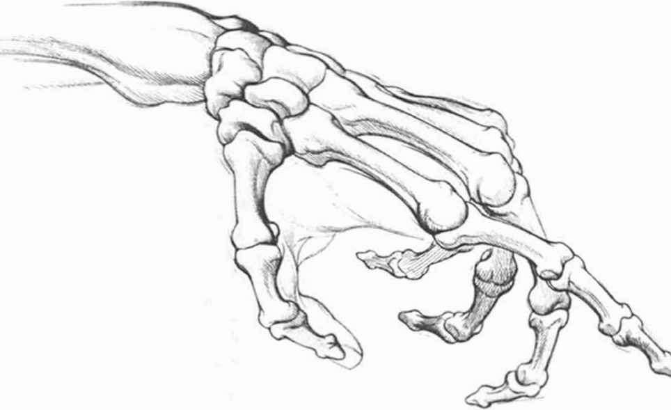 Image Result For Skeleton Sketch In Different Positions 8th Grade