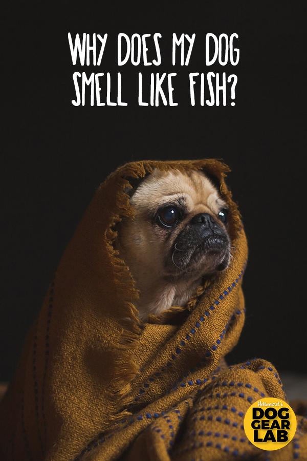 Why Does My Dog Smell Like Fish? Dog smells, Dog skin