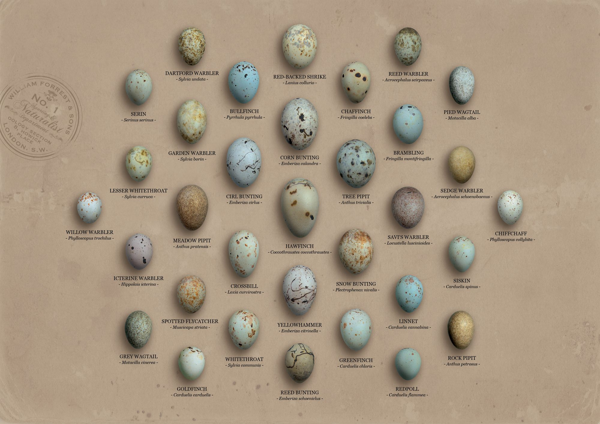 finches butings #eggs #food #bird (With images)   Bird ...