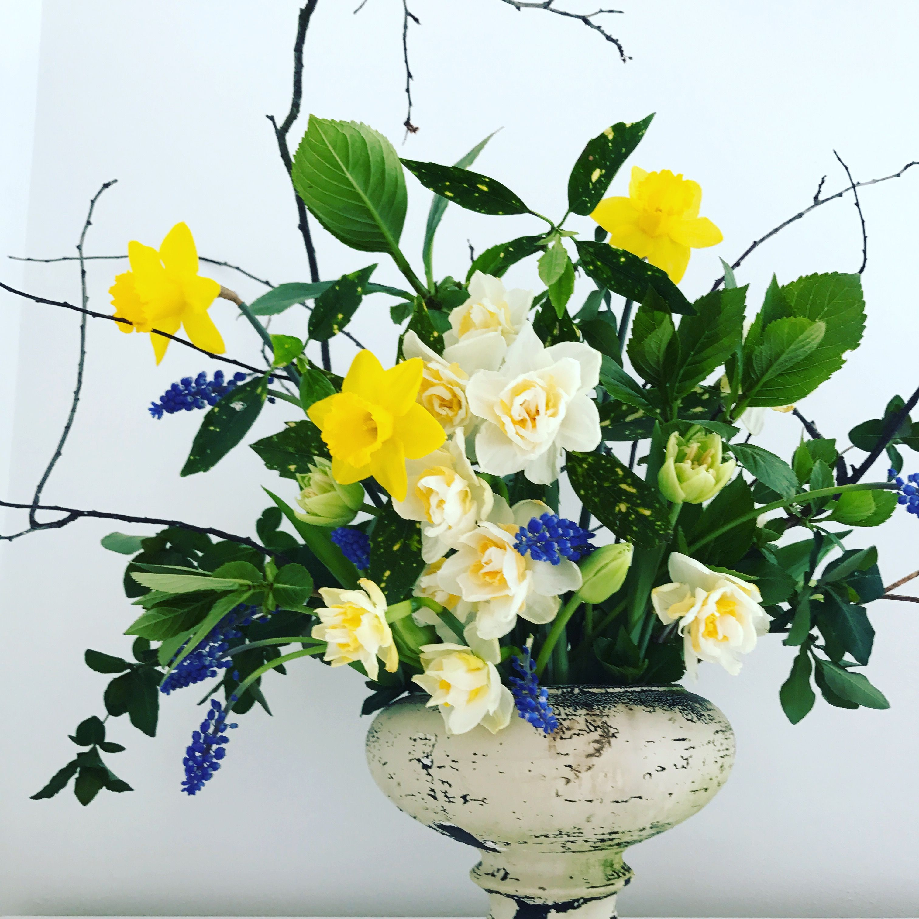 Dutch masters style spring daffodil arrangement by flowerology
