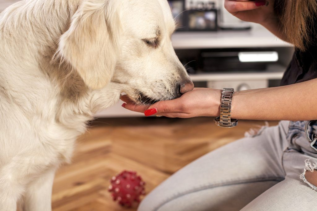 How To Help A Reluctant Pet Take Medication Soft Dog Treats