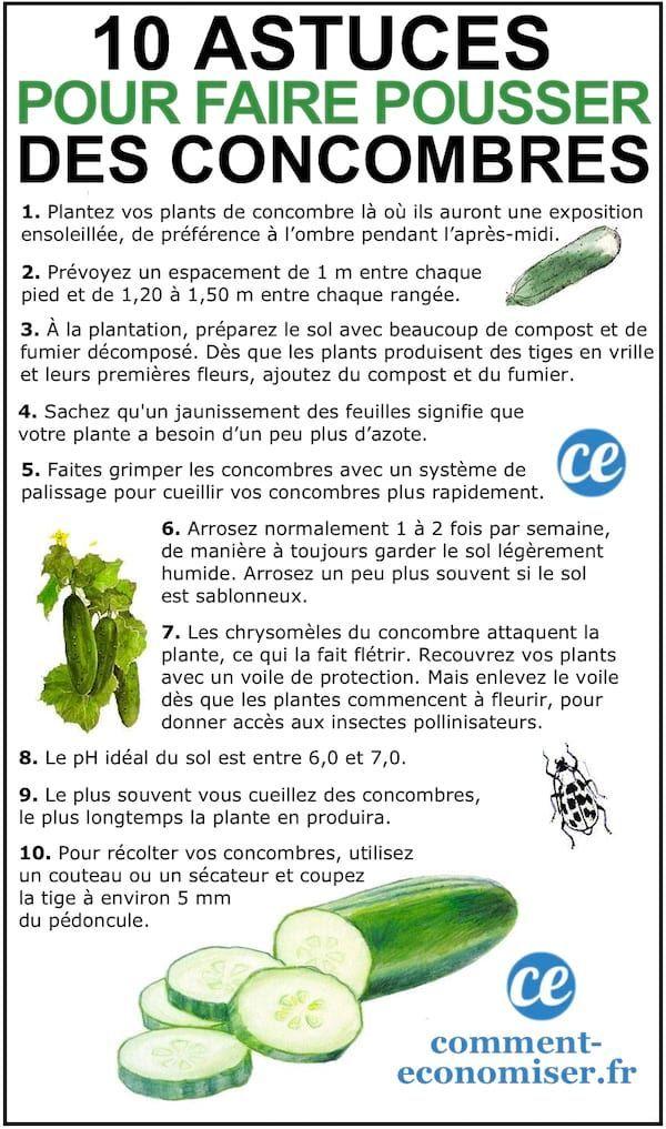 Photo of 10 Astuces De Maraîcher Pour Faire Pousser De Beaux CONCOMBRES.